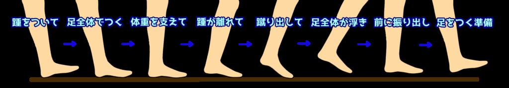 足部でみた歩行の周期
