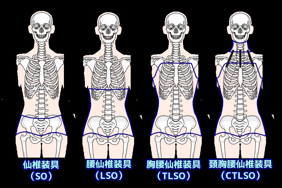 コルセットの丈の長さによる分類