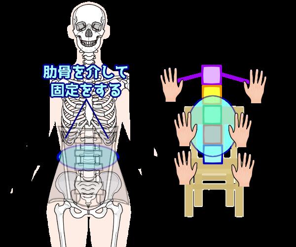 肋骨を介して固定する