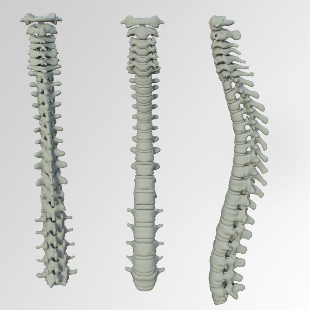 脊椎(背骨)