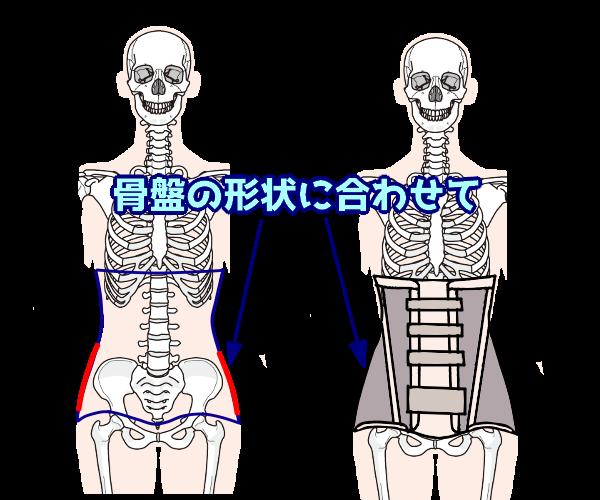 骨盤の形状に合わせて