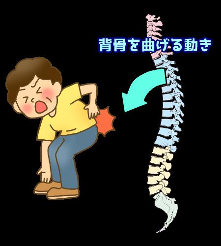 脊椎の屈曲