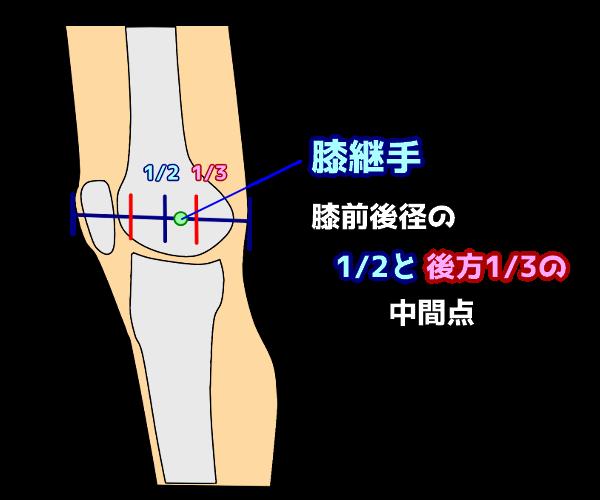 膝継手の位置