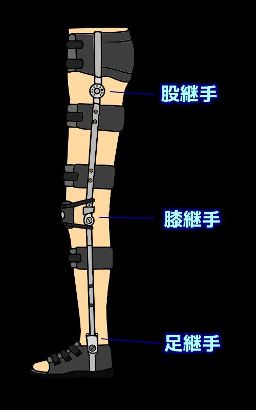 下肢の継手